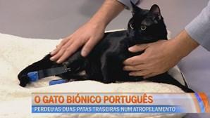 Gato patas biónicas