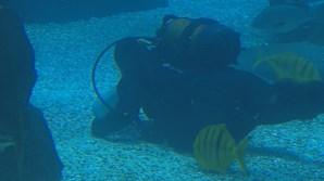 Biólogos marinhos