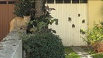 Ataca vizinhos com espingarda