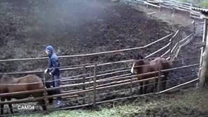 Descobre que o namorado fez sexo com cavalo
