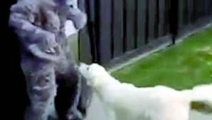 Cão assusta-se com disfarce do dono