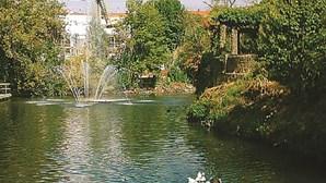 Quatro cursos de água poluídos