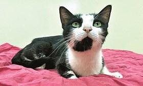 Gato resgatado no centro de recolha de animais em Mirandela