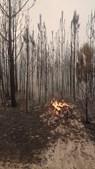 Pinhal de Leiria foi consumido pelas chamas