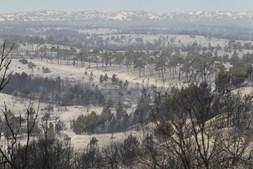 Paisagem destruída pelo incêndio de Vieira de Leiria, Marinha Grande