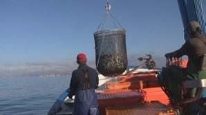 Pesca da sardinha interditada no Norte e Centro