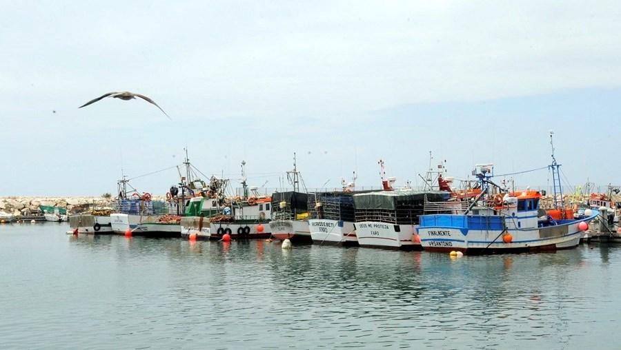 Escassez leva armadores a questionarem viabilidade da pesca de polvo