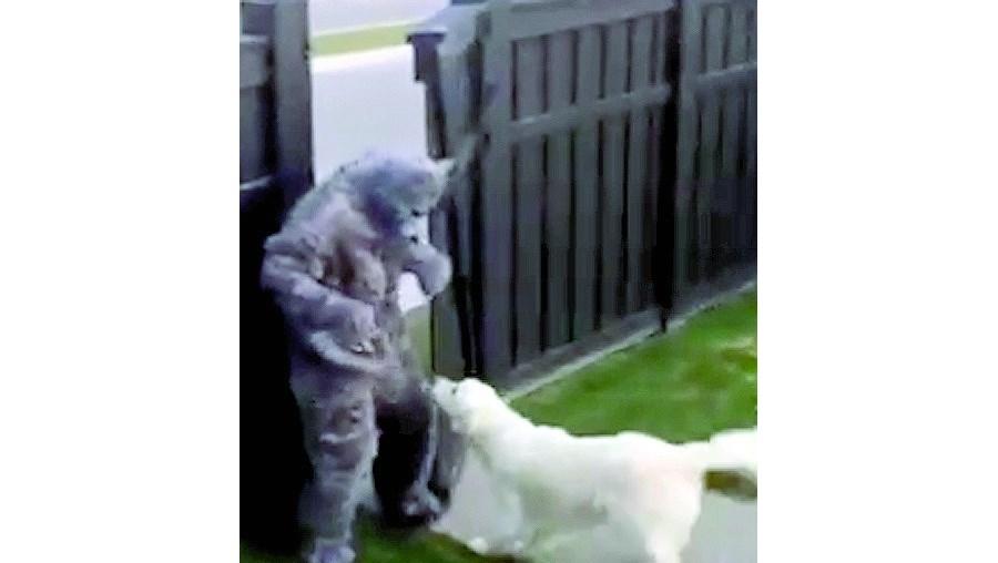 Cão assusta-se com dono