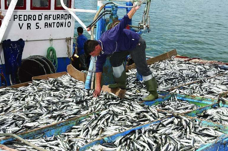 A pesca é outra das áreas nas quais podem ser apresentados projetos para apoio de fundos europeus