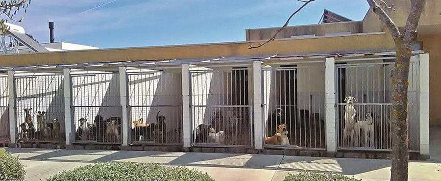 Centro de recolha de animais em Mirandela