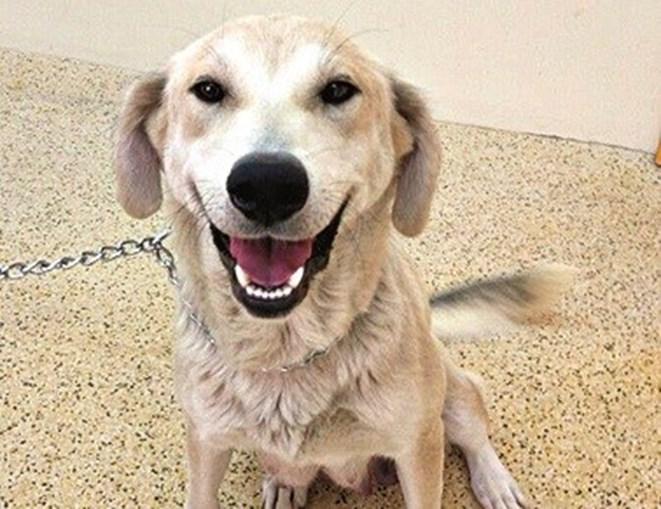 Cão resgatado no centro de recolha de animais em Mirandela