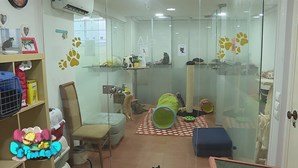 Hotel para felinos