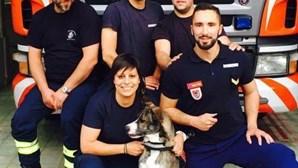 'Nina' ajuda bombeiros de Viana do Castelo