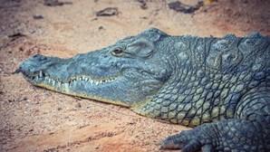 Dormem em cima de carro cercado por crocodilos