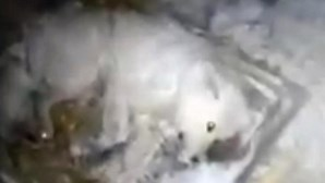 Atira água para cão e deixa-o morrer congelado a -32ºC
