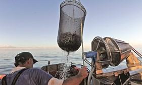 Pesca da sardinha está parada desde o final do mês de outubro devido ao defeso obrigatório da espécie