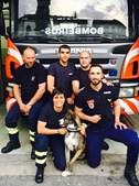 Cadela Nina é figura do calendário dos bombeiros de Viana do Castelo