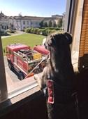Cadela vive no quartel e é a mascote dos bombeiros. Calendário solidário à venda por 3,5 euros