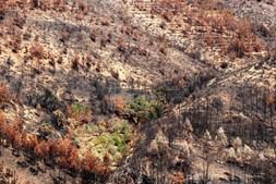 Floresta devastada pelas chamas em Mação