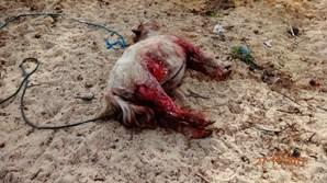 Animal foi atacado e morreu