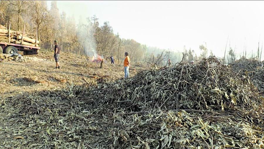 Estão a decorrer os trabalhos de preparação do terreno onde vão ser plantadas novas árvores