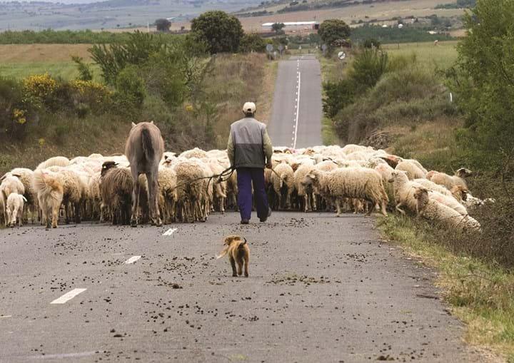Homem, de 64 anos, trabalhava como pastor numa herdade próxima de Portel e vivia em condições desumanas