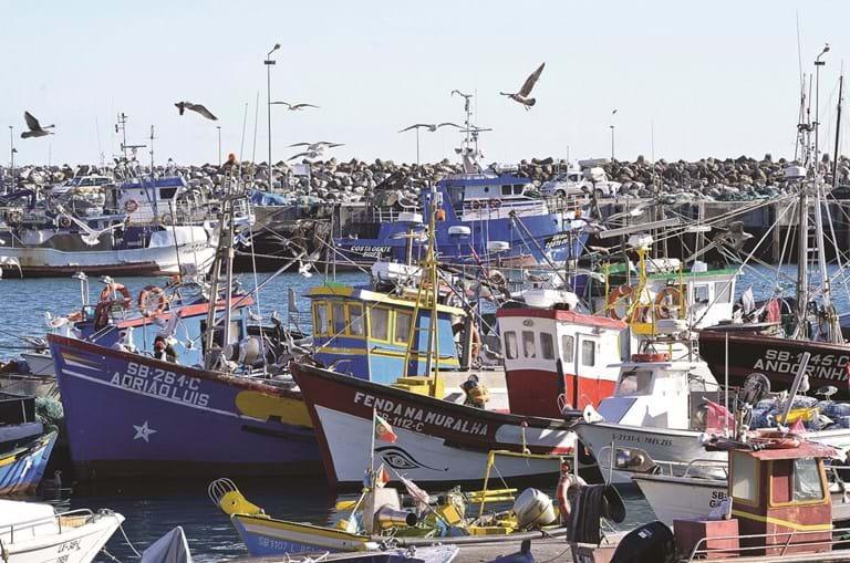 Frota da sardinha está parada em todo o País. Portaria do Governo vai compensar a falta de rendimento de pescadores