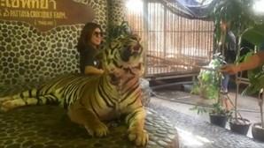 Tigre agredido diariamente para turistas poderem tirar foto