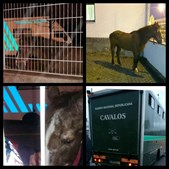 Cavalo estava na estrada