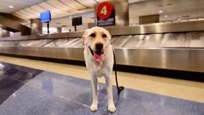 Cão foge de aeroporto e passa Natal sozinho
