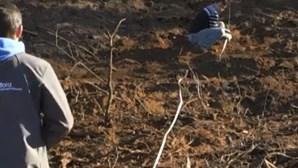 Municípios já podem autorizar plantação de árvores