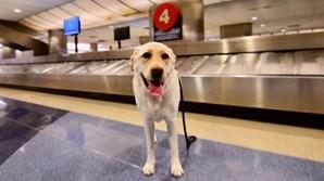 Cão desaparece em aeroporto