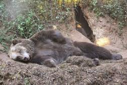 A vida selvagem é parte imperdível da visita ao parque