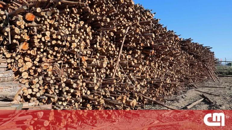 classificados madeira jornal correio da manha classificados convivio