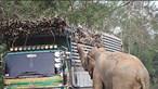 Elefante guloso provoca engarrafamento