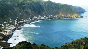 Descoberta substância que combate Parkinson e Alzheimer no chá verde dos Açores