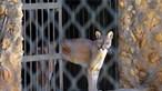Animais morrem à fome em zoo da Venezuela