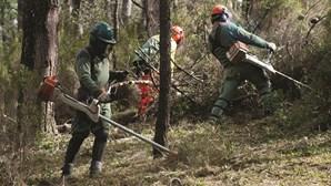 GNR começa a aplicar coimas sobre incumprimentos na limpeza da floresta