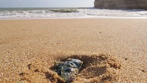 Caravelas-portuguesas invadem praias algarvias