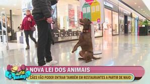 Nova lei dos animais de estimação