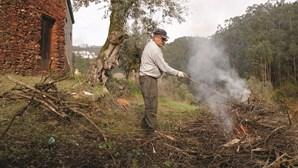 """Governo considera """"contraproducente"""" prorrogar limpeza de terrenos florestais até 31 de maio"""