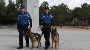 Cães da polícia fazem buscas em autocarro e descobrem que condutora estava drogada