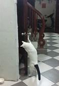 Curiosidade de gato liberta 'prisioneiro'