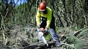 """Campanha de sensibilização """"Floresta Segura 2021"""" da GNR arrancou esta segunda-feira"""