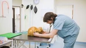 PAN defende um hospital veterinário municipal a preços acessíveis