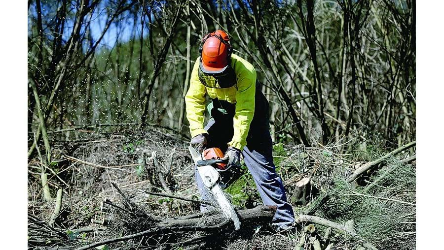Limpeza das florestas