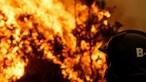 Homem condenado por quatro incêndios foi ilibado do fogo que matou 73 cães em Santo Tirso