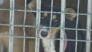 Criador condenado à pena mais pesada de sempre por maus-tratos a animais