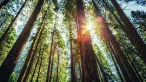 Explorações florestais têm 48 horas para comunicar achados arqueológicos