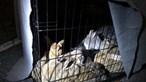 Dezenas de coelhos domésticos abandonados em estação